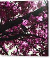 Blissful Morning Acrylic Print