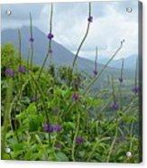 Blissful Purple Acrylic Print