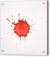 Blood Droplet Acrylic Print
