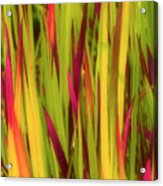 Blood Grass Acrylic Print