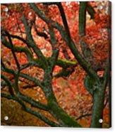 Blood Red Autumn Tree Acrylic Print