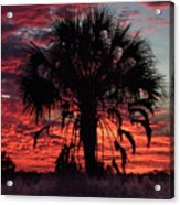 Blood Red Sunset Palm Acrylic Print