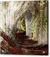 Blood Redwoods Acrylic Print