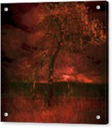 Bloody Tree Acrylic Print
