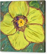 Bloom I Acrylic Print