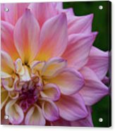 Bloom Acrylic Print