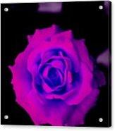 Bloom N Love Acrylic Print