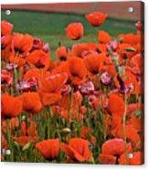 Bloom Red Poppy Field Acrylic Print