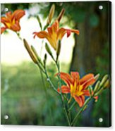 Bloom Where You're Planted Acrylic Print