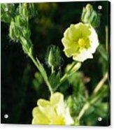 Bloomin Happy 1 Acrylic Print