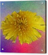 Blooming 3 Acrylic Print