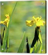 Blooming At Green Lake Acrylic Print