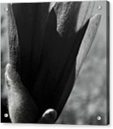 Blooming Black And White Acrylic Print