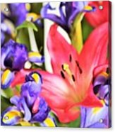 Blooming Colors Acrylic Print