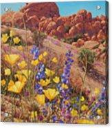 Blooming Desert Acrylic Print