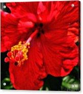 Blooming Flower 2 Acrylic Print