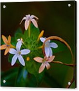 Blooming Joy Acrylic Print