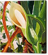 Blooming Philodendron Tree After Rain Acrylic Print