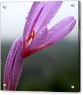 Blooming Purple Flower Acrylic Print