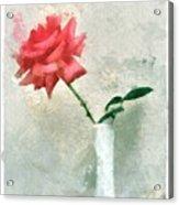Blooming Rose Acrylic Print
