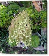 Blooming Succulent Plant. Amazing Acrylic Print