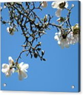 Blooming Trees Art Print White Magnolia Flowers Baslee Troutman Acrylic Print