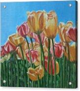 Blooming Tulips Acrylic Print