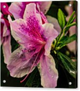 Blooming Wet Acrylic Print