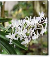 Blooming White Flower Spike Acrylic Print