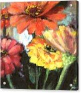 Blooming Zinnias Acrylic Print