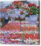 Blooms Ablaze Acrylic Print