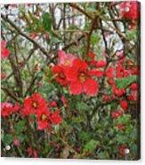Blooms In The Alley Acrylic Print