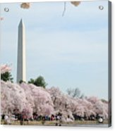 Blooms Of The Tidal Basin Acrylic Print