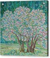 Bloomy Trees Acrylic Print