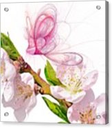 Blossom And Butterflies Acrylic Print