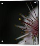 Blossom Angle Acrylic Print