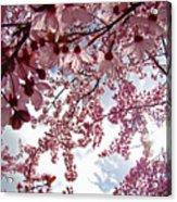 Blossom Artwork Spring Flowers Art Prints Giclee Acrylic Print