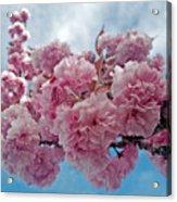 Blossom Bliss Acrylic Print