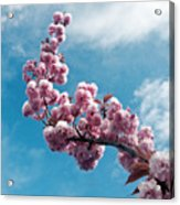 Blossom Impressions Acrylic Print