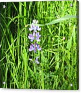Blossom In The Grass Acrylic Print