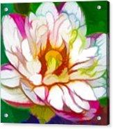 Blossom Lotus Flower Acrylic Print
