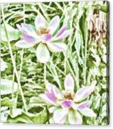 Blossom Pink Lotus Flower Acrylic Print