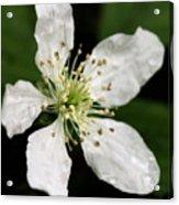 Blossom Square Acrylic Print