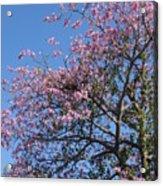 Blossom Time Acrylic Print