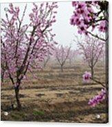 Blossom Trail Acrylic Print