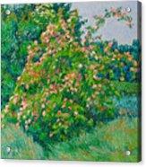 Blossoming Bush Landscape Acrylic Print
