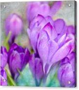 Blossoming Souls Acrylic Print