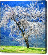 Blossoming Acrylic Print