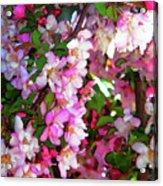 Blossoms 1 Acrylic Print