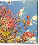Blossoms Against The Sky Acrylic Print